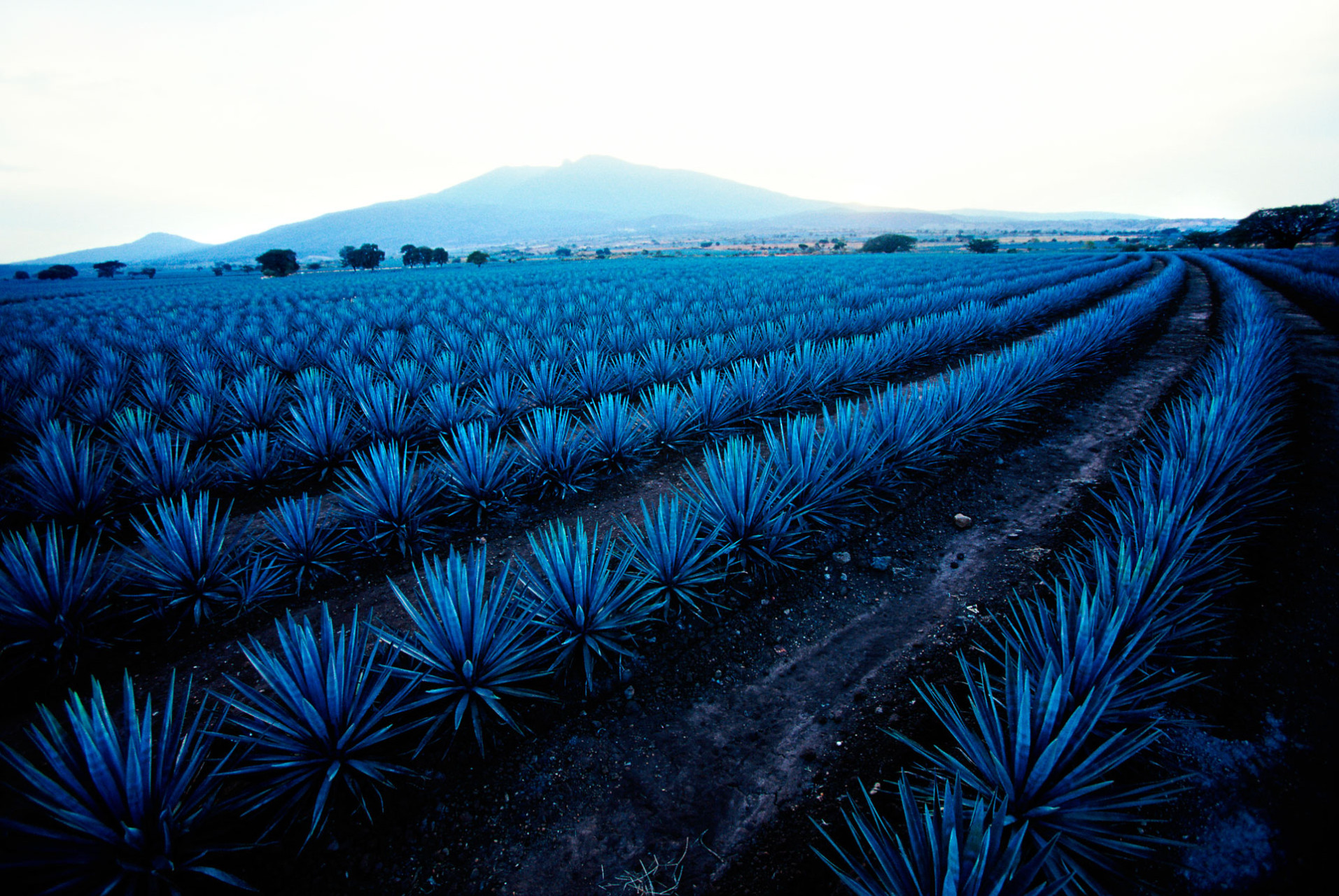 Tequila. A town – Mexico